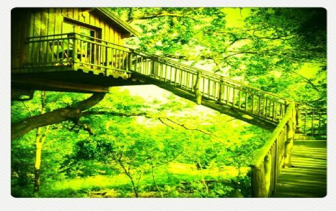 LA CABANE PERCHEE DE Amorotz-Succos, au Pays Basque, est une chambre d'hôtes dans le chêne, 2 ou 4 personnes, tout confort+services, à 7 m de H. Accès aisé. Vue sur les sommets des Pyrénées et coucher de soleil sur les collines. Lumineuse et Equipée de SDB complète,terrasse, salon de jardin sous les arbres, prairie et coin feu de camp. Ouvert à l'année. A 40 mn de Bayonne.Prix avec petit déjeuner compris.