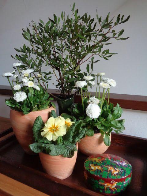 Un piccolo giardino dentro casa https://lefotodiluisella.blogspot.it/2017/03/giardino-su-vassoio.html