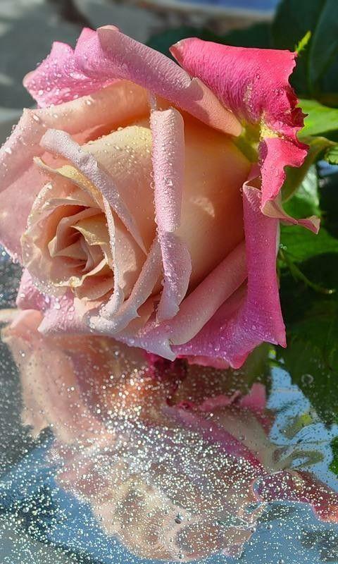 анимация роза на воде холодильник, телевизор