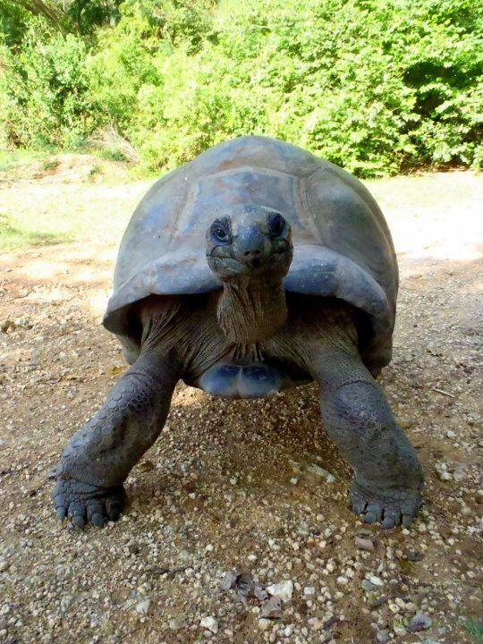 200-letni żółw #Kenya #Kenia Natalia H. pracownik działu Podróży Korporacyjnych