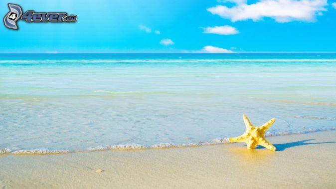 tengericsillag, nyílt tenger, homokos tengerpart