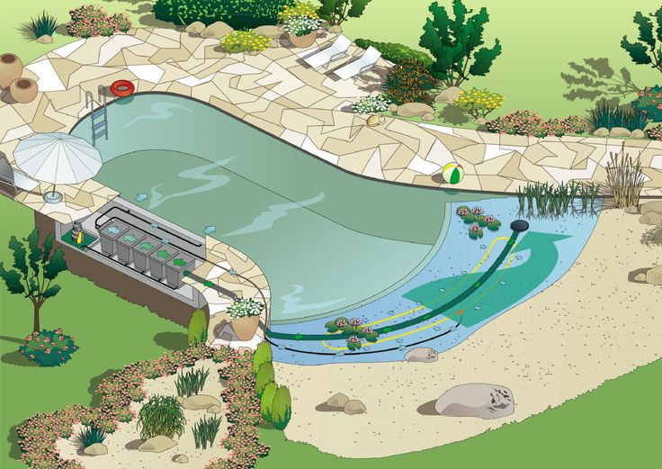 Aquatechs swim ponds - How to make a natural swimming pool ...