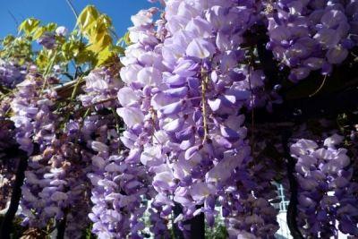 Top cinci flori foarte populare, însă extrem de otrăvitoare http://www.antenasatelor.ro/curiozit%C4%83%C5%A3i/natura/8845-top-cinci-flori-foarte-populare,-insa-extrem-de-otravitoare.html