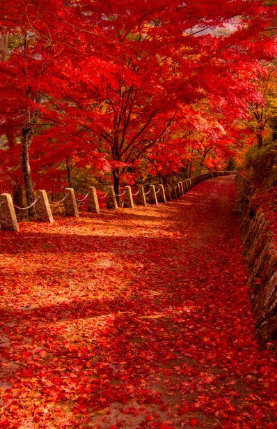 Autumn Leaves - Nara, Japan.  Wow!  Can you imagine standing there alone in silence?