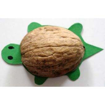 Machen Sie eine Nussschalenschildkröte