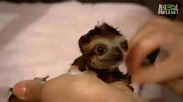 10 GIFs which unequivocally prove that sloths are the best thing on the internet – Us Vs Th3m