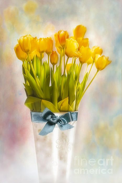25 Best Images About Tulips On Pinterest Tulips In Vase Glass Vase And Soft Pastels