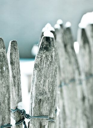 Winter Country Fence