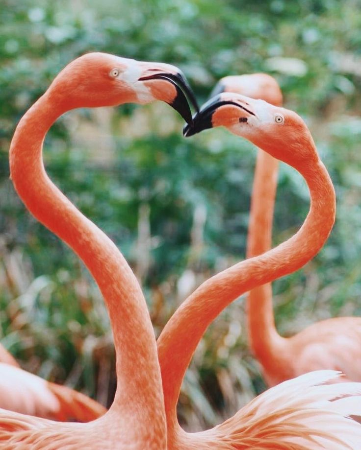 @fpflorida Love is in the air