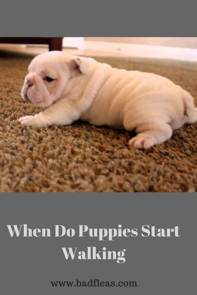 When Do Puppies Start Walking Dog Advice Newborn Puppies Puppies