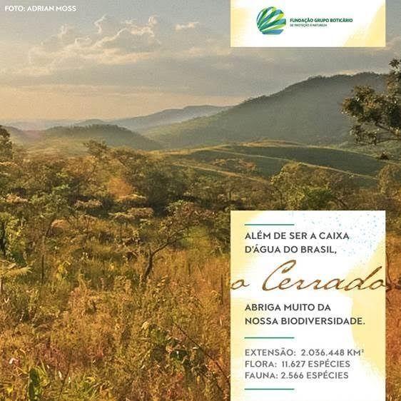 O Cerrado é o segundo maior bioma da América do Sul, ocupando 22% do território do Brasil. Ele é conhecido como caixa d'água do Brasil pela união de três fatores principais: lá estão as nascentes de muitos rios do nosso país, a região possui localização central e altura elevada. É lá que estão as nascentes de importantes rios brasileiros. Conservar o Cerrado é conservar grande parte dos recursos hídricos do Brasil. Hoje é Dia do Cerrado, uma data para nos lembrarmos da importância dele para…