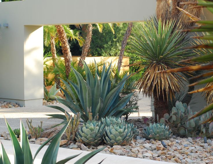 17 best images about desert on pinterest easy for Garden design with palms