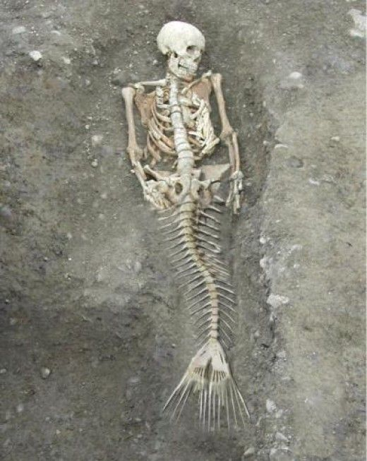 Is This The Photo Of A Real Mermaid Skeleton? Click the photo to check out the full story.