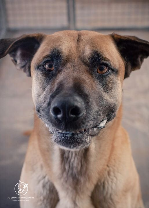 Who could resist this face? His pound name is Mason and if you are seeking a gentle giant to share your life with, then you simply must go visit him at Renbury Farm Animal Shelter and adopt him. Mason is a big boy, however he is also very gentle. I'm not