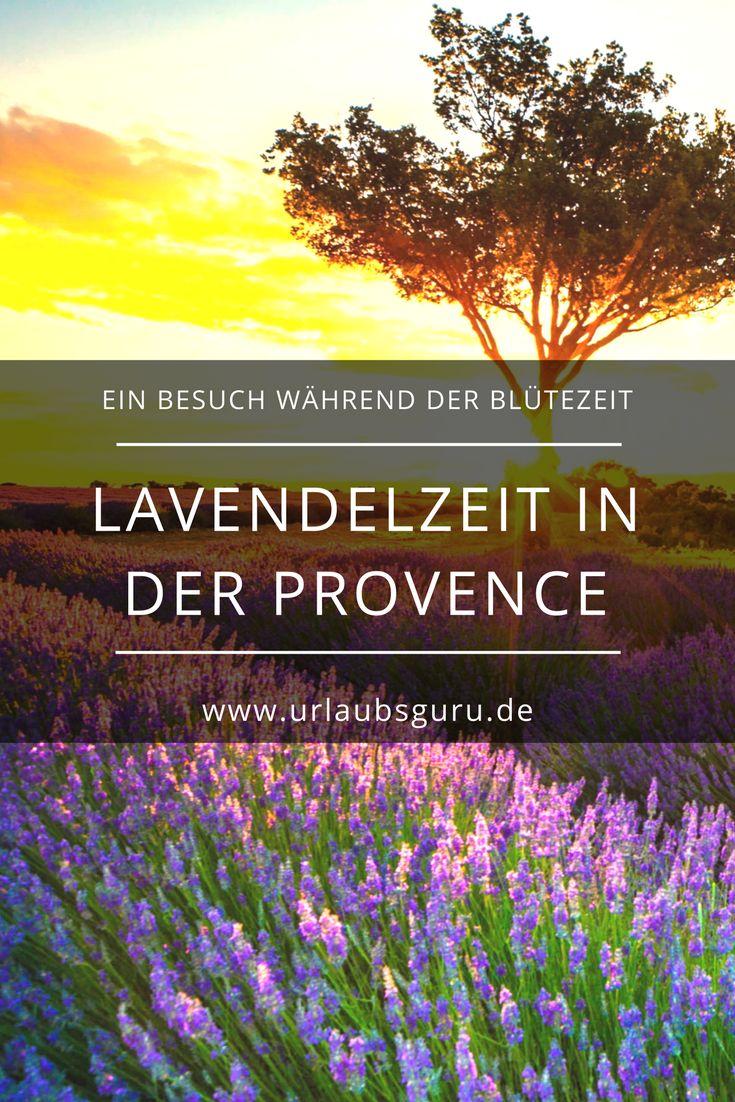 Der Lavendel steht sinnbildlich für die Provence. Ein Besuch zur Blütezeit ist Pflicht, um die Lavendelfelder in ihrer vollen Pracht zu erleben