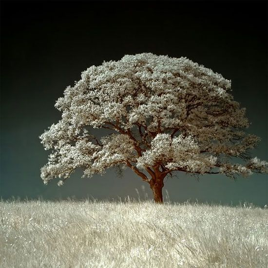 The White Field infrared photo by dingodave