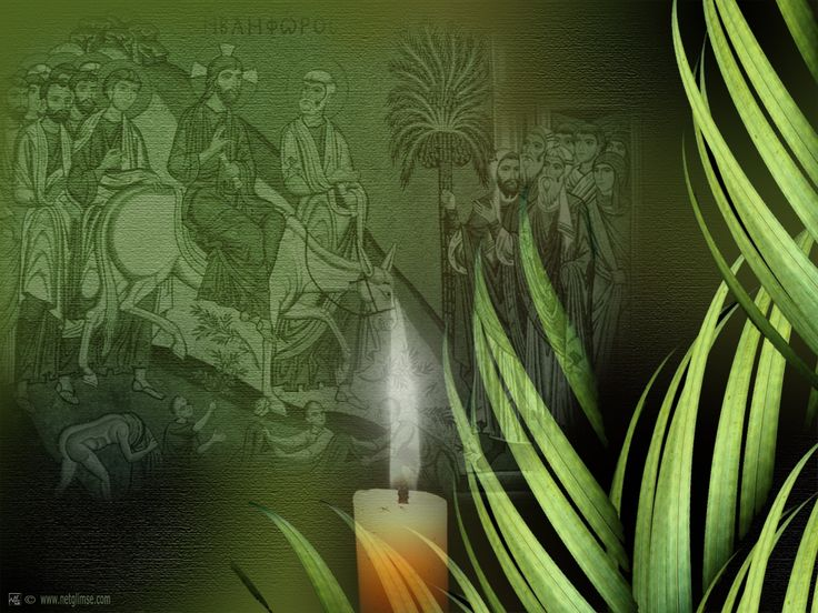 62 best images about palm sunday on pinterest the lord for Prayer palm plant