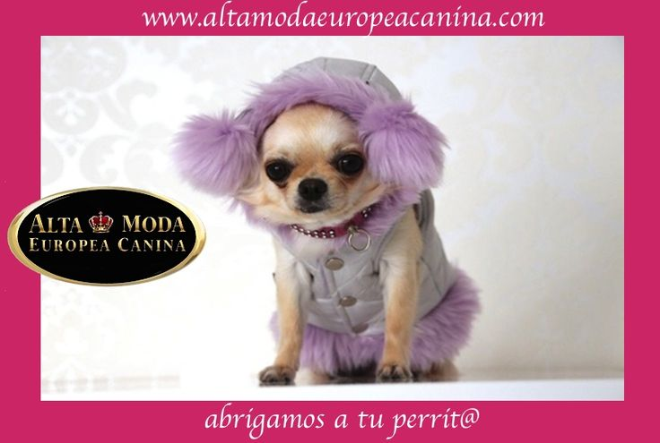 https://www.facebook.com/pages/Alta-Moda-Europea-Canina/150696401702372