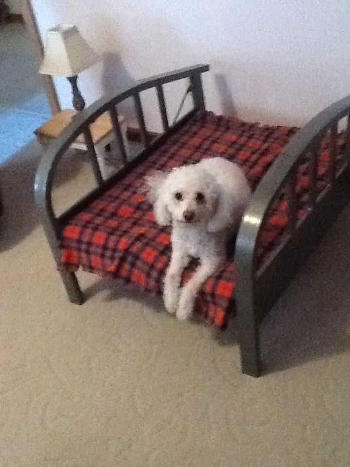 51 best diy dog beds images on pinterest homemade dog for Homemade pet beds