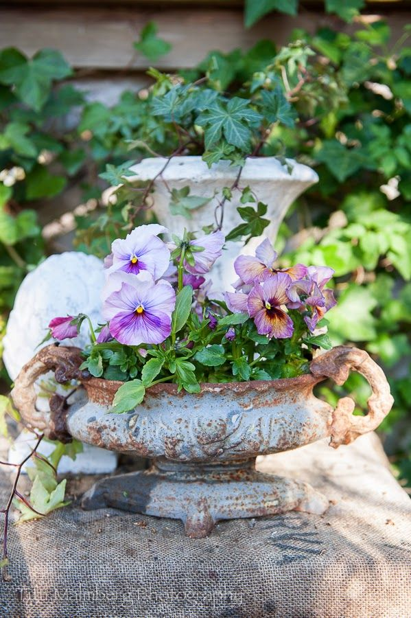 Urn with pansies