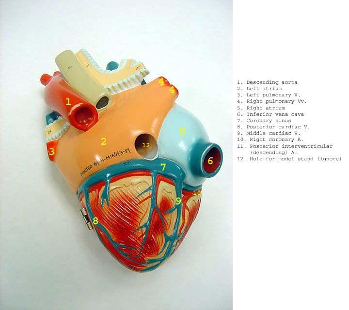 heart_post_dg_label.jpg (720×640)