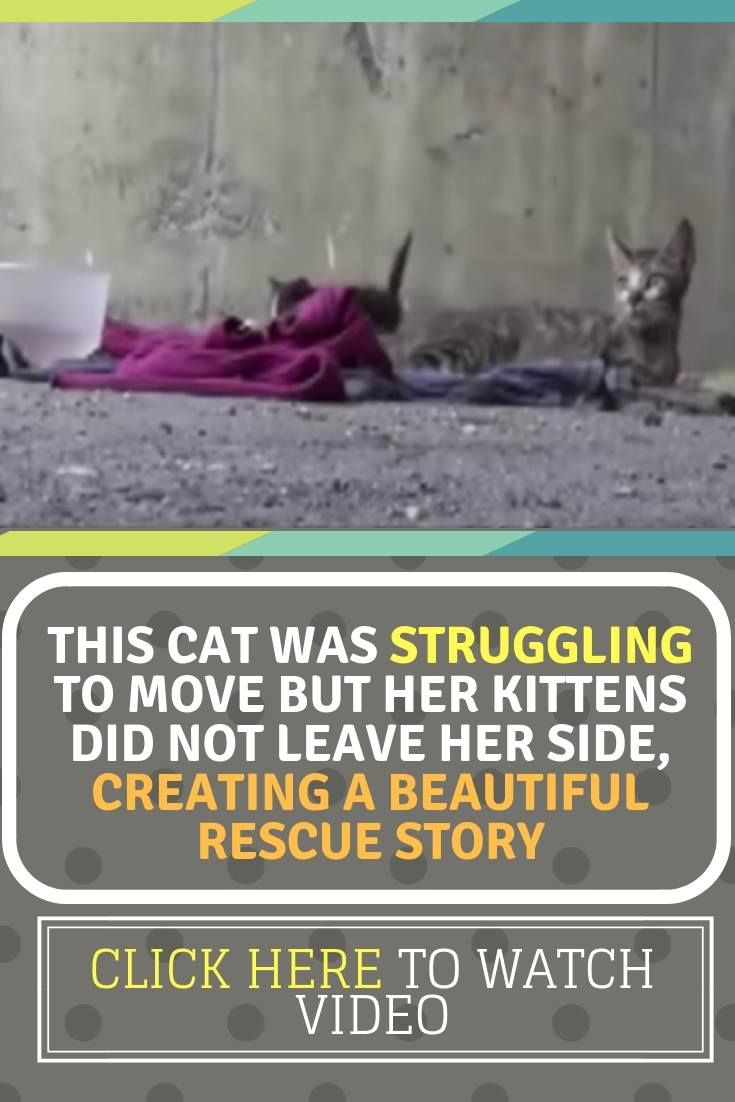 This Cat Was Struggling To Move But Her Kittens Did Not Leave Her Side Creating A Beautiful Rescue Story Kittens Cats Cat Memes