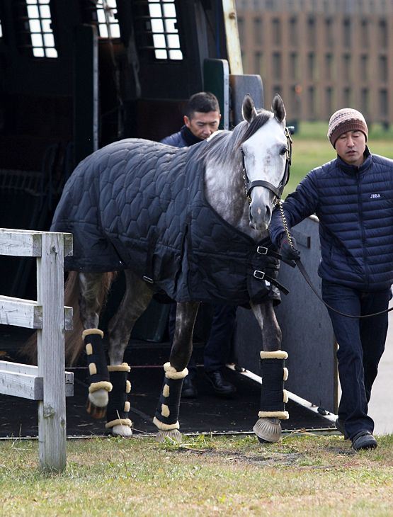 CREATOR arrived in JBBA Shizunai Stallion Station.