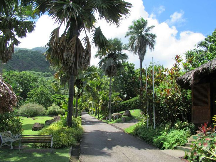 The Botanical Gardens at Victoria on Mahe Island, Seychelles, contains many exotic plants including the coco-de-mer.