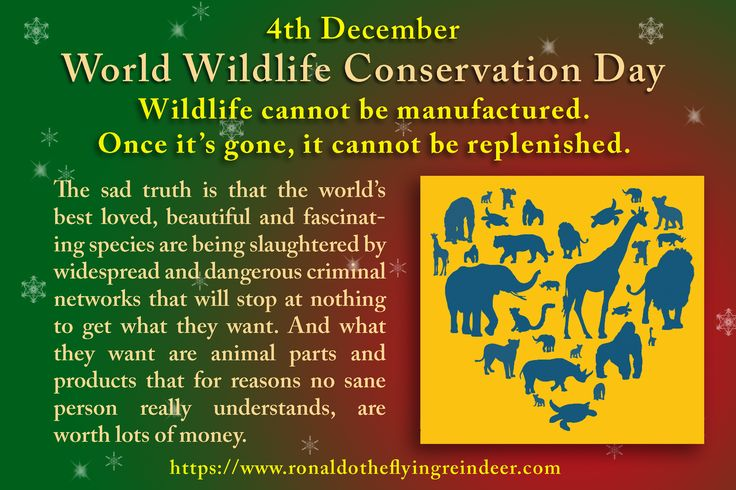 #today 4th Dec is #WorldWildlifeConservationDay #NationalDiceDay #NationalSockDay The sad truth is that the world's best loved, beautiful and fascinating species are being slaughtered #WorldWildlifeConservation #WorldWildlife #WildlifeConservation # Wildlife