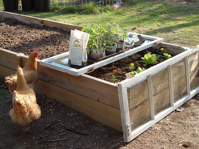 raised bed and the windows make for a perfect early start of the season