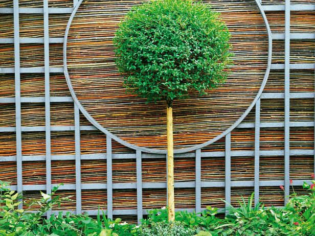 dimension & depth: trellis fence backed with bamboo fence with topiary in front