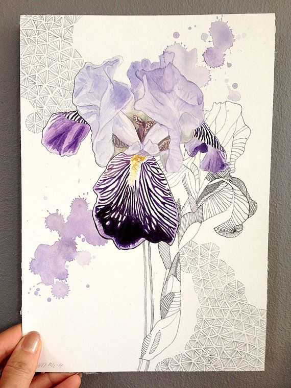 Original watercolor drawing, Iris germanica, one of a kind on Etsy…