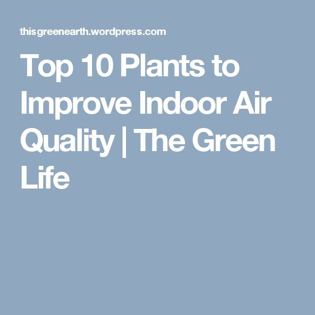 17 best ideas about indoor air quality on pinterest air for Best plants to improve air quality