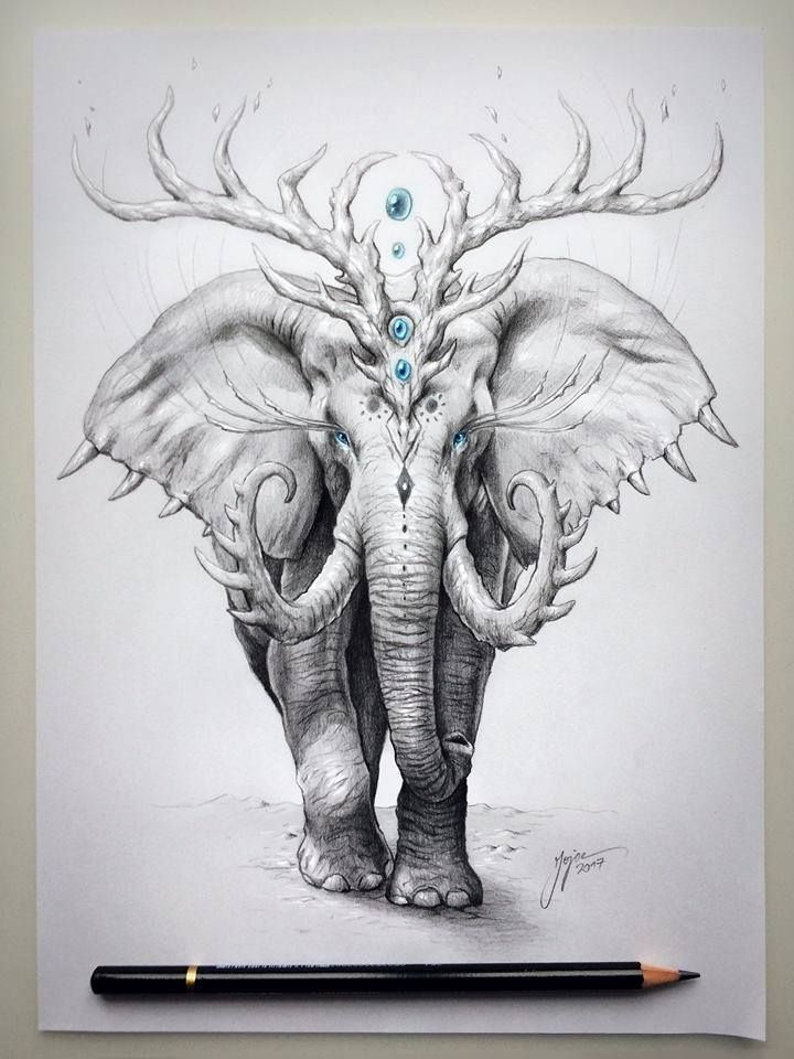 best 25 elephant drawings ideas on pinterest drawings