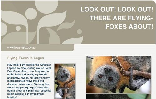 Children's Flying-fox Fact Sheet - Logan City Council - Megabats (Flying-Fox, Fruit bat) and Microbats