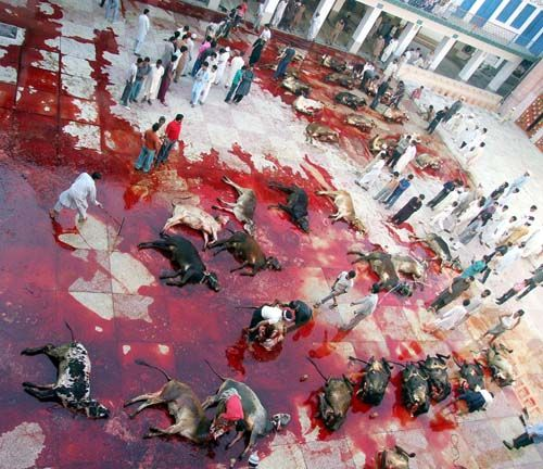 Pakistan Eid-ul-Azha sacrificial animals costlier than cars  http://www.thehansindia.com/posts/index/2013-10-16/Pakistan-Eid-sacrificial-animals-costlier-than-cars-74098