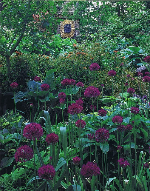 Highgrove by iandjbannerman, via Flickr  like the colour of that allium