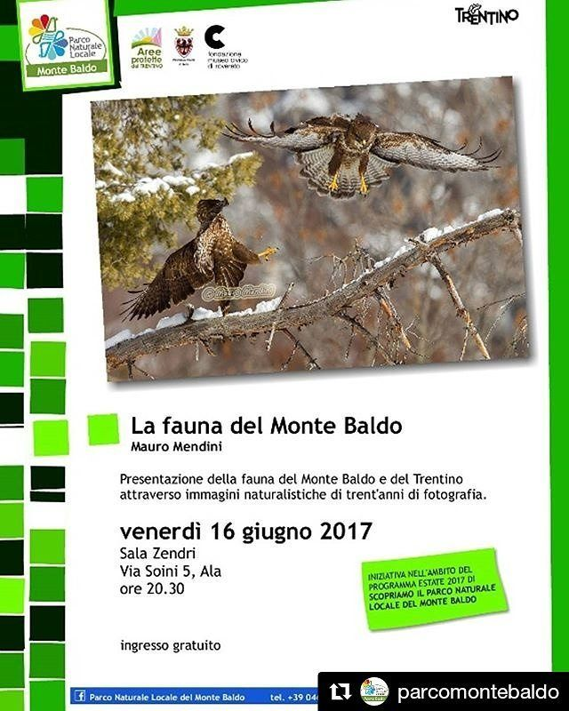 """""""#Repost @parcomontebaldo (@get_repost) ・・・ Venite a trovarci venerdì 16 giugno 2017 alle ore 20:30 ad Ala, presso Sala Zendri in via Soini n°5 per un'interessante presentazione della fauna del Monte Baldo e del Trentino attraverso immagini naturalistiche di trent'anni di fotografia con gli esperti della Fondazione Museo civico di Rovereto. Ingresso libero e gratuito Scopri tutti gli eventi del Parco sul nostro sito! #parcomontebaldo - #montebaldo #faunadelmontebaldo #serata #areeprotette…"""