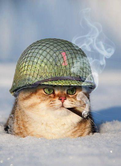 Смешные животные #кот в #каске