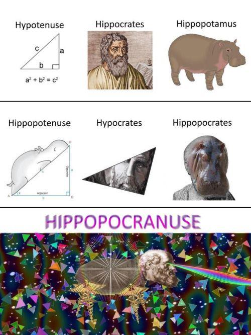 Hipotenusa, Hipócrates, Hipopótamo