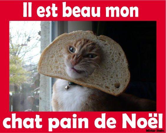 chat pain de noel - Recherche Google