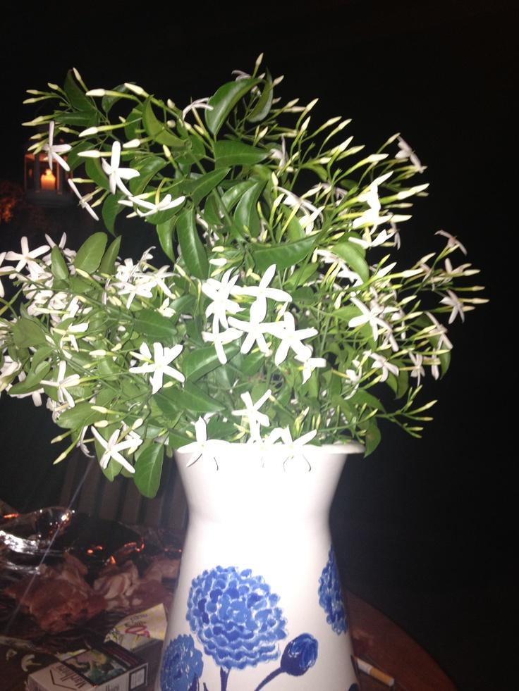 17 Best Images About Jasmine Arrangement Jazmin On Pinterest Madagascar Jasmine Vine And Flower