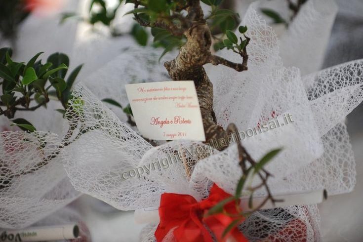 Voglia di Bonsai offre uno sconto del 5% sulle bomboniere bonsai The Wedding Italia
