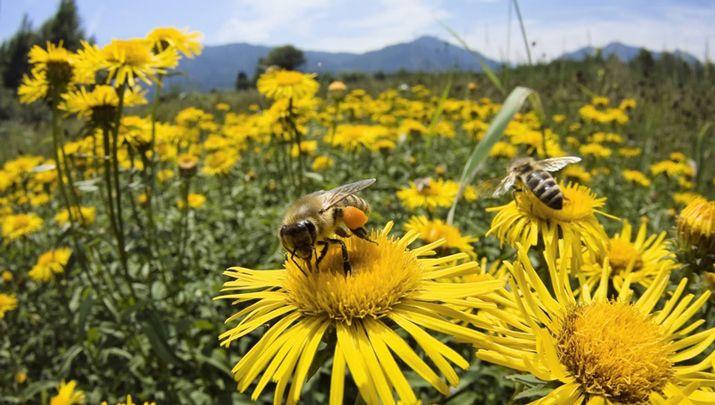Biliyor muydun ? /// Arılar Neden Ortadan Kayboluyor?…