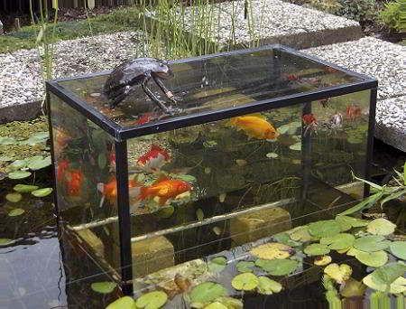 Constructie met aquarium in vijver