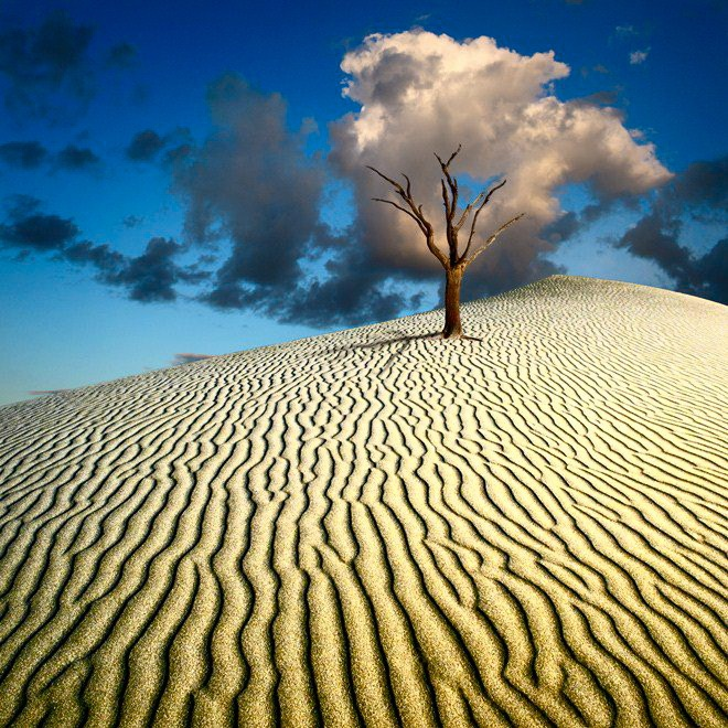1 dead tree: Beautiful Planets, Natural Beautiful, Colors Photography, Sands Dune, Cloud Trees, Landscape Photography, Kar Keister, Planets Earth, Mothers Natural