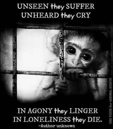 One Voice for Animal Rights's Photo: