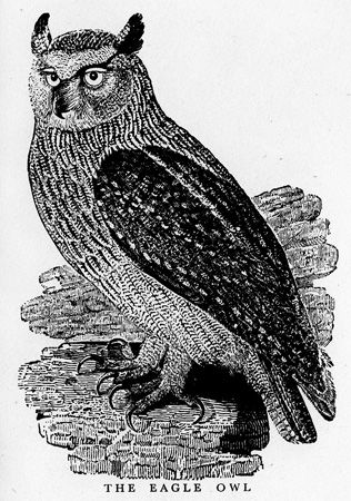 thomas bewick - Google Search