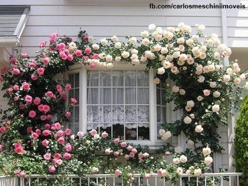 Na janela!    Arrumar as flores para que cresçam na janela dá um super efeito!