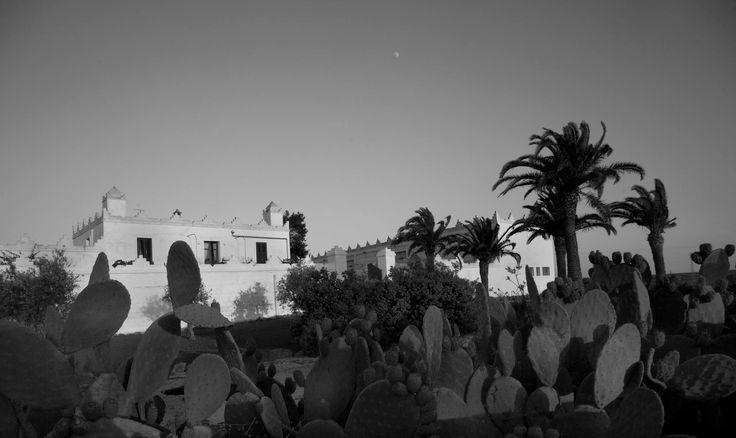 Welcome to #MasseriaSurani #Salento #Puglia #Primitivo #Negroamaro #Fiano #Tommasiwine www.masseriasurani.it